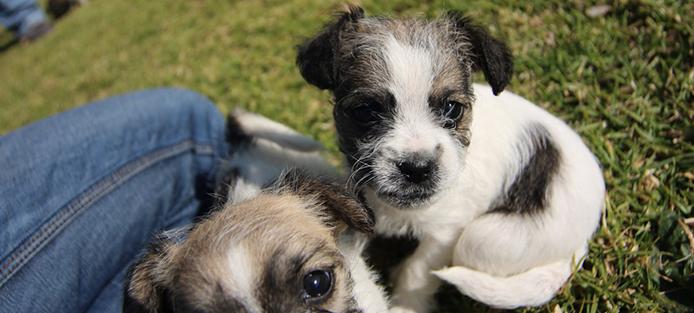 Puppy_socialization2