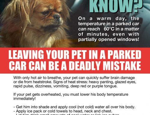On a hot day, your pet is safer at home!