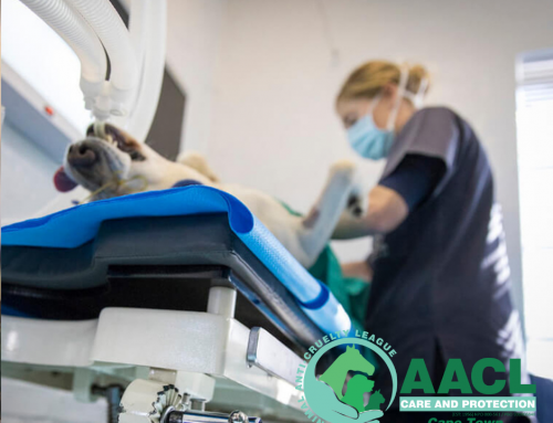 AACL Cape Town is excited to welcome another Veterinary Nurse