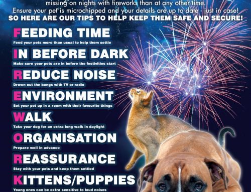Fireworks & Your Pets 2019