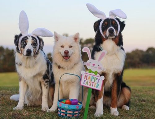 5 Most common Easter toxins for pets